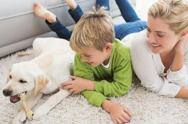 Pet Urine & Odor Treatments